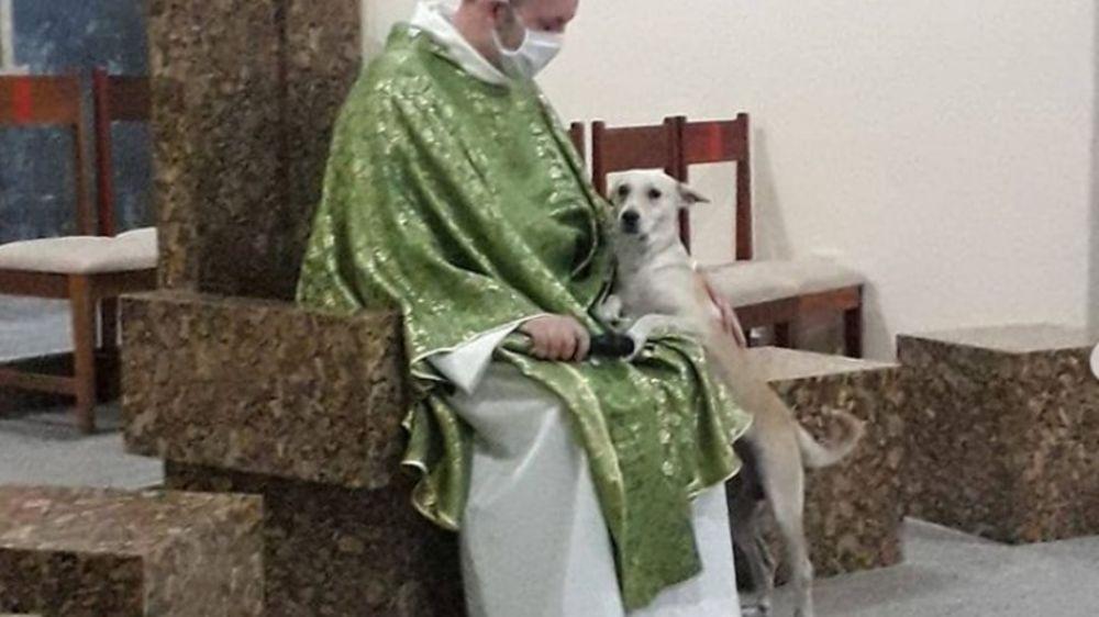 Da misa con perros abandonados para que sean adoptados