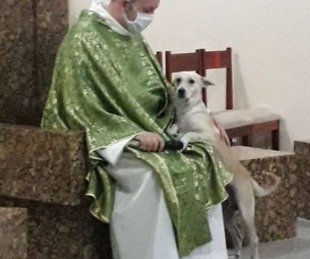 foto: Da misa con perros abandonados para que sean adoptados
