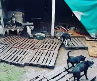 foto: Santiago del Estero: conmovedor video de la inundación en un refugio de perros