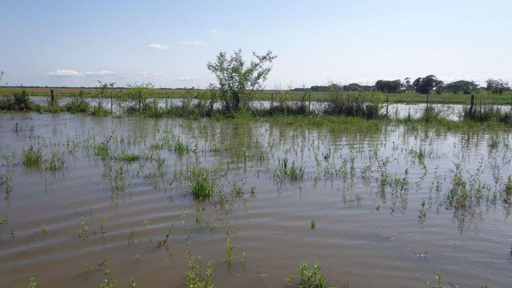 Certificado de No Inundabilidad únicamente para Organismos públicos