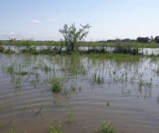 foto: Certificado de No Inundabilidad únicamente para Organismos públicos