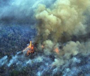 foto: Deforestación: el Amazonas perdió el 8% de su territorio en 18 años