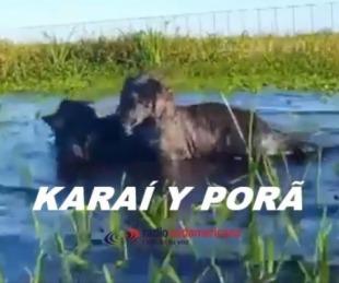 foto: Karai y Porã: los pequeños yaguaretés disfrutan en familia