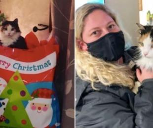 foto: Un gato volvió a su casa luego de haber estado cinco años desaparecido