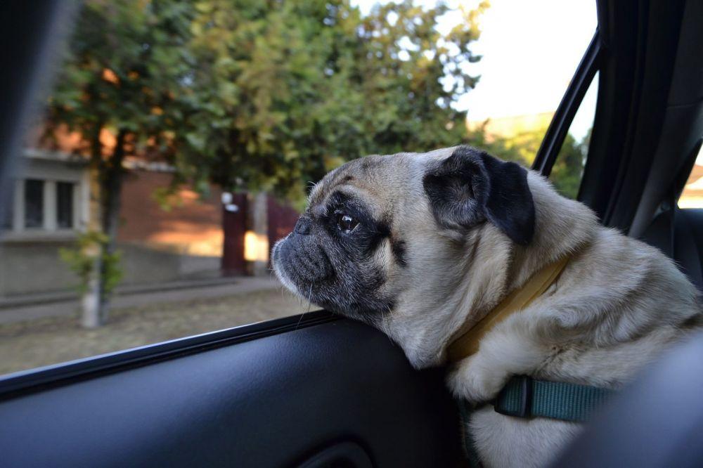 Viajar con mascotas: qué hay que tener en cuenta
