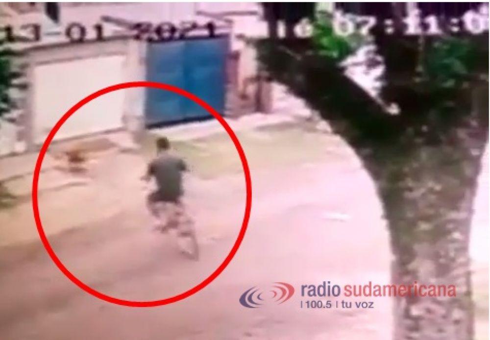 Videos: así secuestraba el violador y asesino a la perrita Rubia