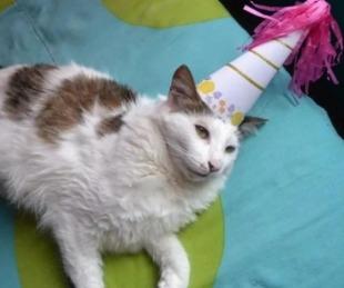 foto: Fiesta de cumpleaños del gato terminó con 15 contagios de coronavirus