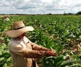 foto: El Gobierno Nacional envió más de $10 millones al sector tabacalero