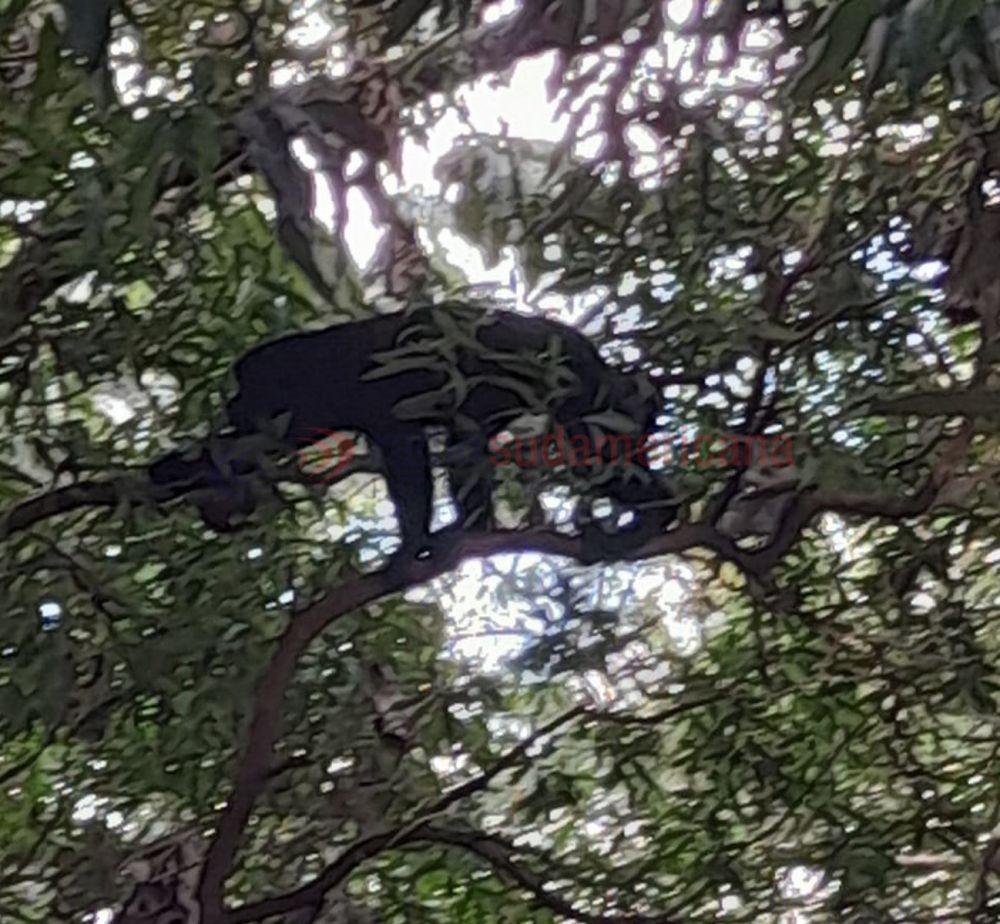 Apareció un mono en el barrio Sur  y piden que lo retiren