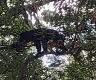 foto: Apareció un mono en el barrio Sur  y piden que lo retiren
