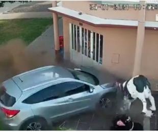 foto: Automóvil se incrustó en una carnicería y una mujer se salvó de milagro