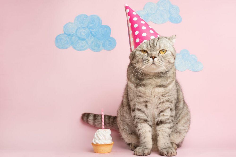 Por el cumpleaños de un gato, 15 personas se contagiaron de coronavirus