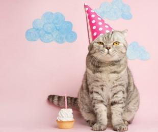 foto: Por el cumpleaños de un gato, 15 personas se contagiaron de coronavirus