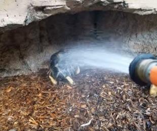 foto: Una tortuga se hizo viral por su tierno