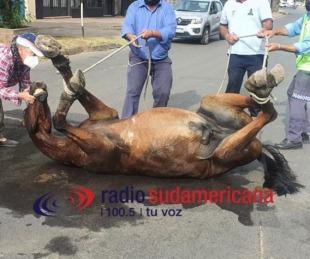 foto: Sacrificaron a un caballo tras ser embestido por una moto