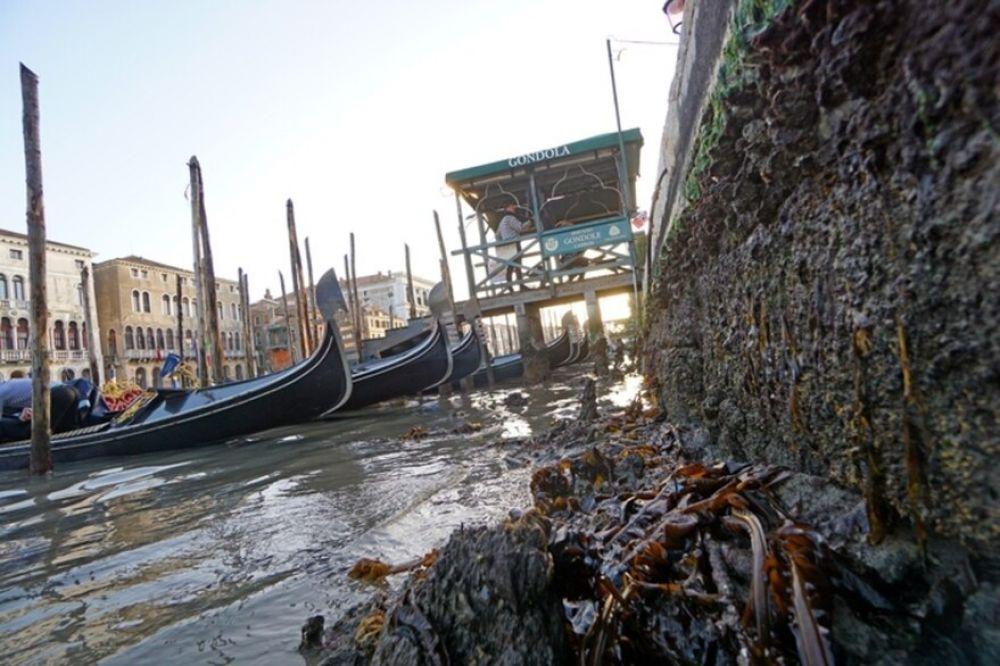 Italia: las impactantes imágenes de Venecia sin agua