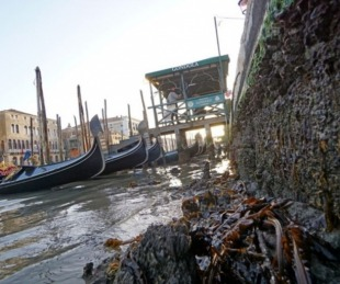 foto: Italia: las impactantes imágenes de Venecia sin agua