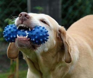 foto: Entretenimiento canino: beneficios y tipos de juegos para mascotas
