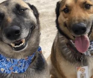 foto: México: dos perros