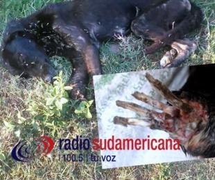 foto: Maltrato animal:
