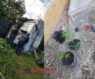foto: Mburucuyá: Tenía un vivero con plantas de marihuana en su casa