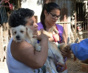 foto: Operativos de Mascotas Saludables para la próxima semana