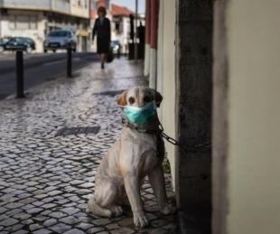 foto: Alerta por mascotas infectadas con la variante británica del Covid-19
