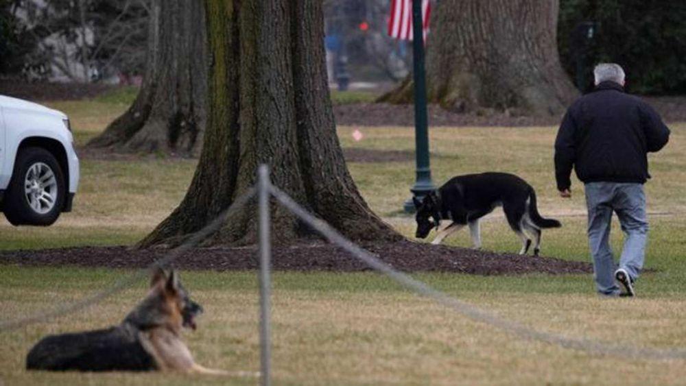 El perro de Biden volvió a morder a una persona en la Casa Blanca