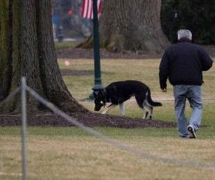 foto: El perro de Biden volvió a morder a una persona en la Casa Blanca