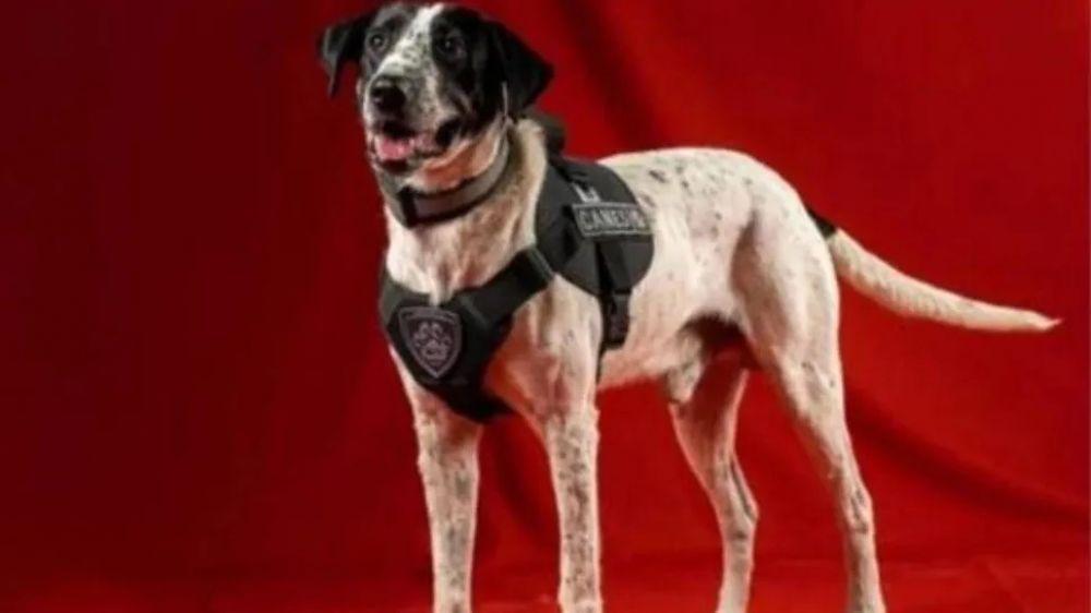 Falopa, el perro policía de Jujuy que es furor en las redes sociales