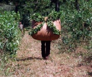 foto: Argentina tuvo que comprarle yerba a Brasil y Paraguay