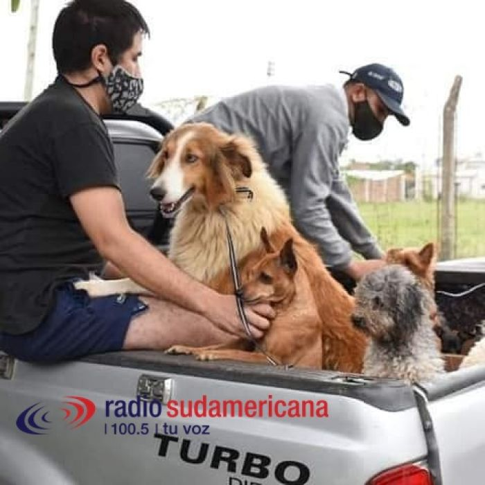 Piden ayuda para los perros rescatados del criadero clandestino