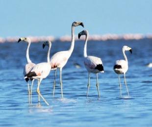 foto: Argentina ya tiene un nuevo Parque Nacional: se llama Ansenuza