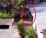 foto: Horror: ahorcó a un perro porque había atacado a su esposa