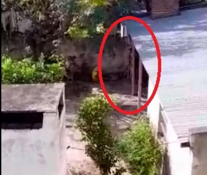 Horror: ahorcó a un perro porque había atacado a su esposa