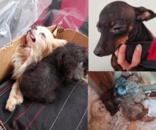 foto: Así estaban los perros del criadero clandestino del barrio Molina Punta