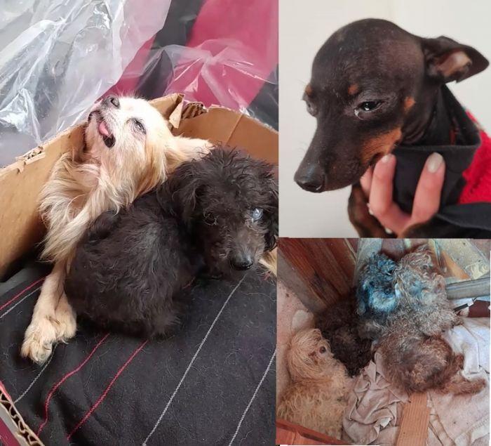 Así estaban los perros del criadero clandestino del barrio Molina Punta