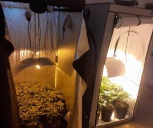 foto: Allanaron un invernadero de marihuana en Resistencia