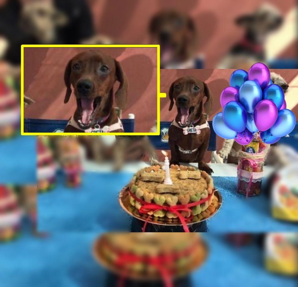Le organizaron una fiesta sorpresa a su perra: ¡mirá su reacción!