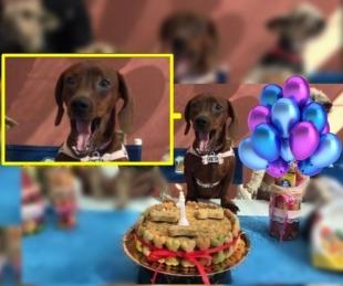 foto: Le organizaron una fiesta sorpresa a su perra: ¡mirá su reacción!