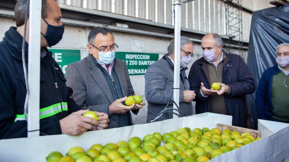 Se certific贸 el primer cargamento de limones con destino a Europa
