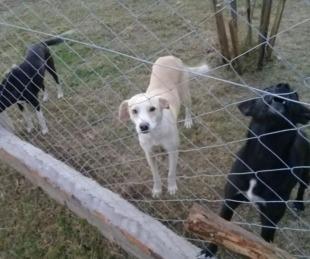 foto: Corrientes: San Roque abrió su refugio para mascotas abandonadas