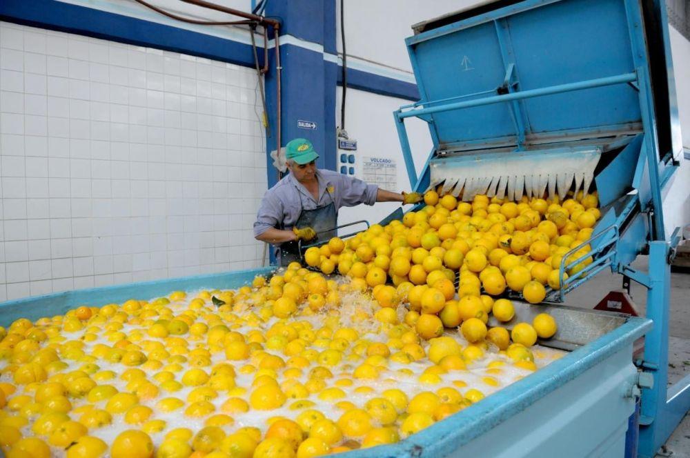Apertura de exportación de cítricos reactivará la economía correntina