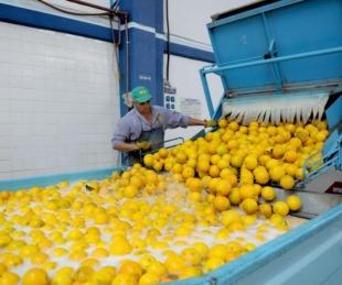 foto: Apertura de exportación de cítricos reactivará la economía correntina