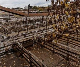 foto: Una propuesta que levantaría el cierre de exportaciones de carne