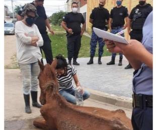 foto: Corrientes: Policías colaboraron en el rescate de un caballo maltratado