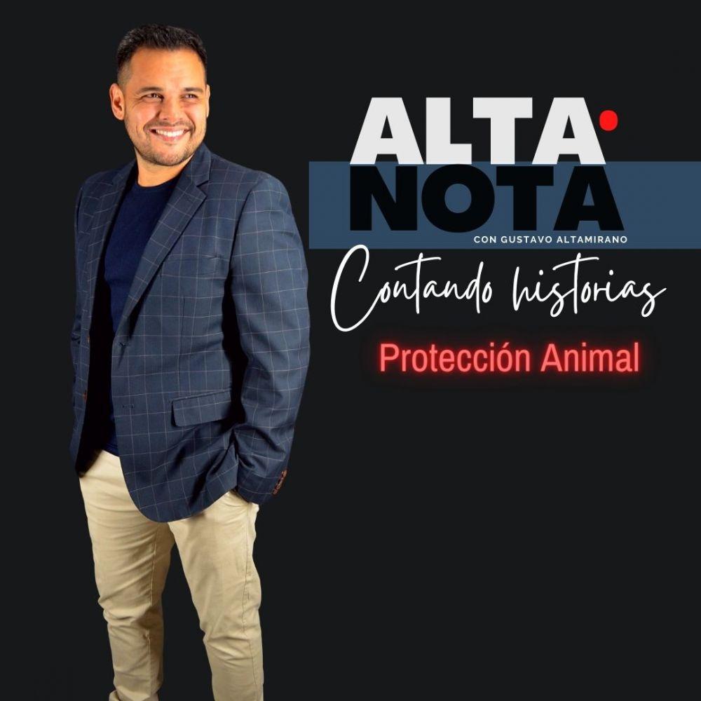 Alta Nota: del maltrato animal a los perros héroes de Corrientes