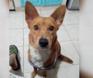 foto: Fallo histórico: le pusieron una perimetral por abusar de su perra