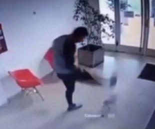 foto: Aberrante video: un árbitro pateó con saña a una perra