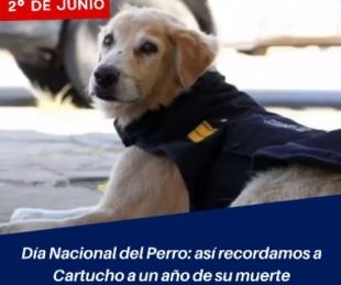 foto: Día Nacional del Perro: recordamos a Cartucho a un año de su muerte